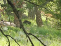 Grizzly beim Baum